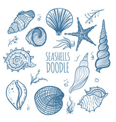 set of seashells on white background vector image vector image