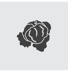 Cabbage icon vector