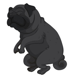 Pet dog with black fur vector