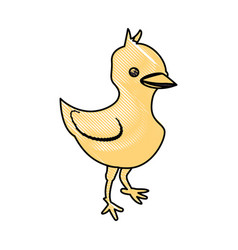 Chick farm animal vector