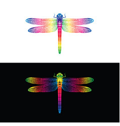 Colorful dragonfly design on white background and vector
