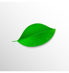Realistic green leaf Ecology concept vector image vector image