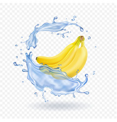 Realistic of bananas isolated vector