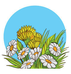 Bouquet of chamomile vector