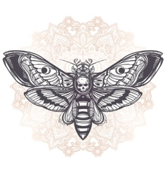 Deaths head hawk moth with mandala vector