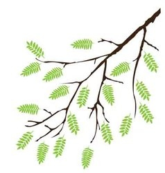 Branch green leaves vector