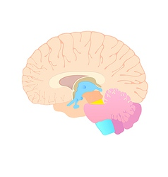convolutions of the brain vector image