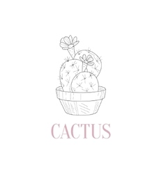 Cactus home plant hand drawn realistic sketch vector