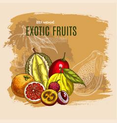 exotic durian mango papaya fruits poster vector image vector image