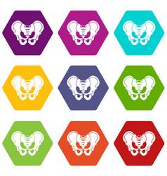 Pelvis icon set color hexahedron vector