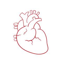 Human heart draw vector