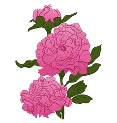 cartoon pink peonies sketch peonies vector image vector image