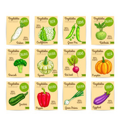 organic fresh vegetable card label price tag set vector image vector image