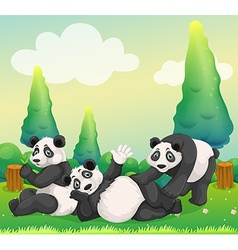 Three pandas playing in the park vector image vector image