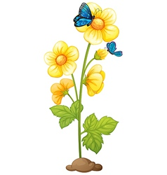 A plant with blooming yellow flowers vector