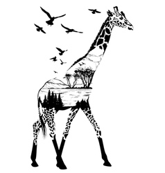 giraffe for your design wildlife concept vector image vector image