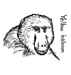 Yellow baboon - sketch hand drawn vector