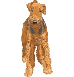 Sketch dog airedale terrier breed vector