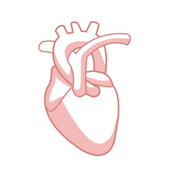 Healthy heart organ human cardiology vector