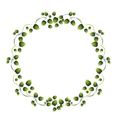 Border green leaves with creepers vector