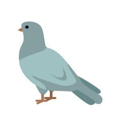 pigeon in flat design vector image vector image