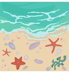 Seashells on the shore vector