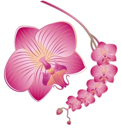 Orchid flower vector