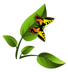 Leaf and Butterfly vector image