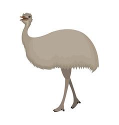 bird ostrich emuafrican wild ostrich single icon vector image