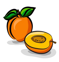 Apricot fruits sketch drawing vector image
