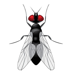 Fly insect sketch symbol vector