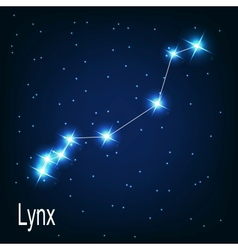 The constellation lynx star in the night sky vector