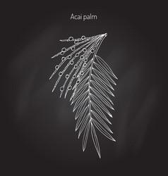acai palm euterpe oleracea vector image vector image