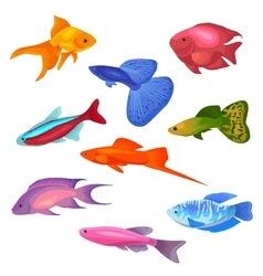 Aquarium fish icons set vector image vector image