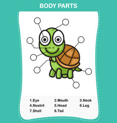 turtle vocabulary part of body vector image vector image