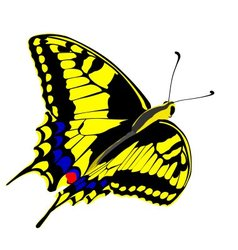 machaon butterfly vector image