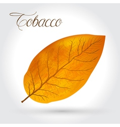 Tobacco leaf icon vector