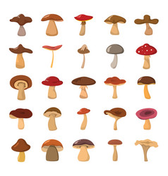 cartoon mushrooms set vector image