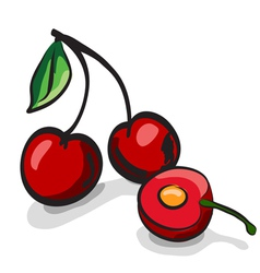 Cherry fruits sketch drawing vector image