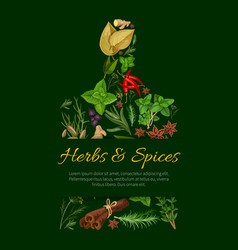 Cutting board poster with culinary herbs and spice vector