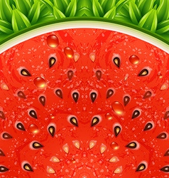 Optical watermelon background pattern vector image vector image