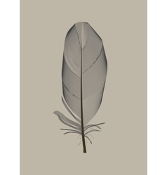 Black bird feather drawn in vector