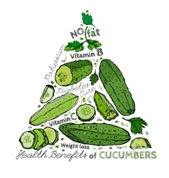 Hand Drawn Cucumber 03 A vector image vector image