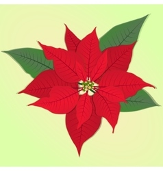 Red flower poinsettia vector