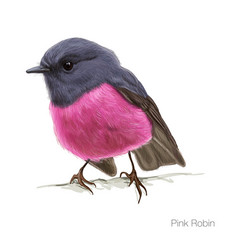 Pink robin hand drawn vector