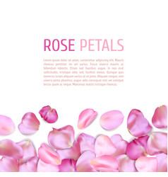 Pink rose petals border vector