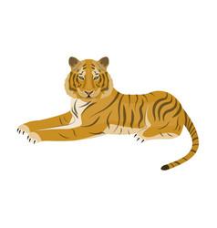 Tiger a predatory animal the belgian tiger a vector