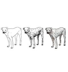 White slim dog vector image vector image