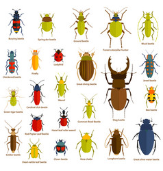 Flat insect set isolated on the white vector