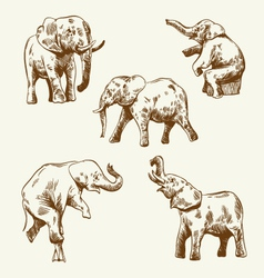 Hand drawn elephant set vector